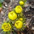 Kwiatowa zmiana warty w ogrodach